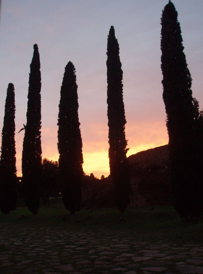 Sunset cypresses