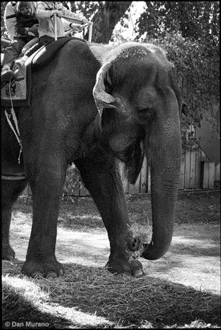 Elephant-ride02