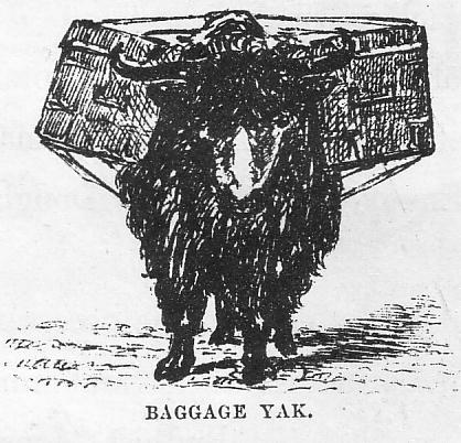Baggage_Yak,_1870s