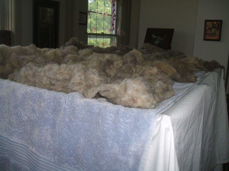 Wool013