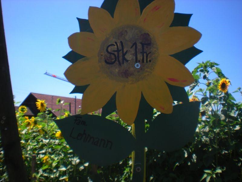 Lehman sunflower
