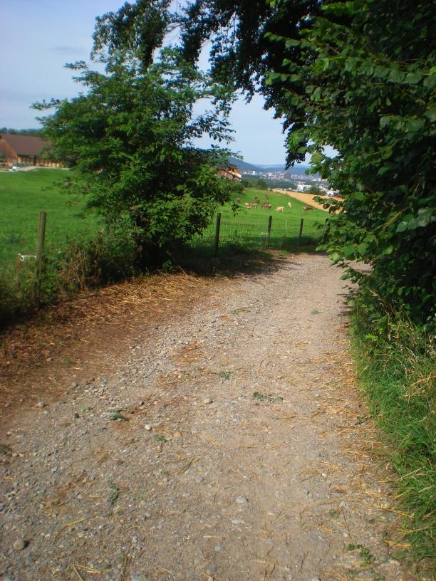 Path_5