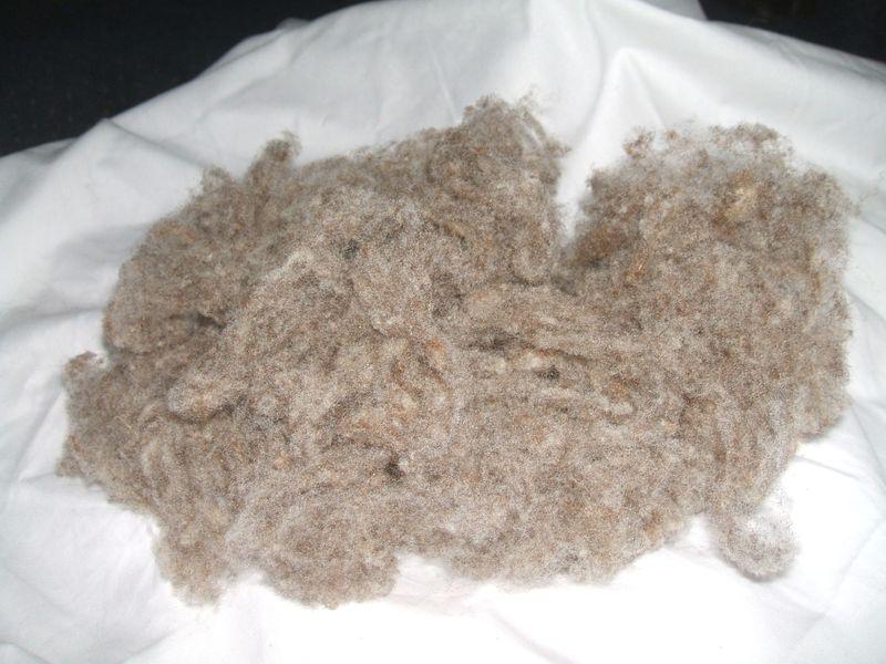 Wool007