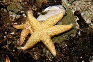 Starfish_melb_aquarium