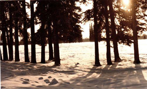 Photo 2 - Fairbanks winter